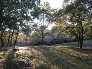 20161102_Umami-Hill-Park_013.jpg